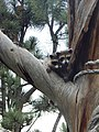 Baby raccoons - Black Hills National Forest - Patti Lynch.jpg