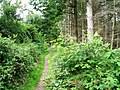 Back Dog Woods - geograph.org.uk - 532586.jpg