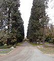 Bad Godesberg Zentralfriedhof Baumreihe.jpg