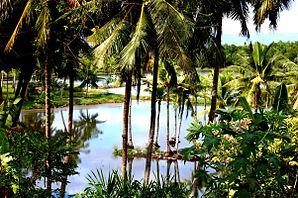 Badian cebu wikipedia for Koi pond quezon city
