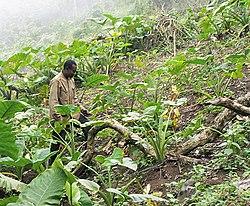 potato cultivation in india pdf