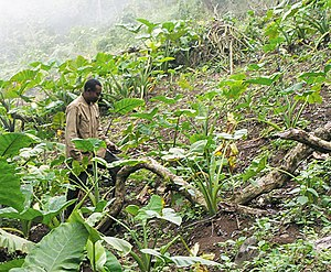 Subsistence agriculture - Like most farmers in Africa, this Cameroonian man cultivates at the subsistence level.