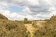 Balloërveld, natuurgebied in Drenthe 04.jpg