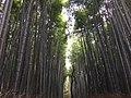 Bamboo Forrest.jpg