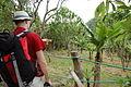 Banana trees (553755141).jpg