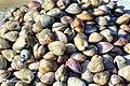 Bandar Abbas Fish Market 2020-01-22 06.jpg