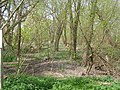 Baston Fen Nature Reserve - geograph.org.uk - 404244.jpg