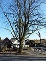 Baum am Schweinebrunnen - panoramio.jpg