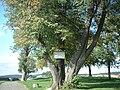 Baum mit Tafel1-abf-.JPG