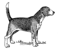 Beagle (PSF).png