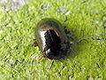 Beetle 221.jpg