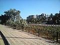 Bhayander creek flawer garden - panoramio (1).jpg
