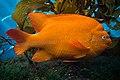 Big Orange Fish (17354300599).jpg
