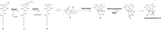 Atrop-abyssomicin C -  Cycloaddition to form atrop-abyssomicin C. Intermediate 2 undergo an acetylation and elimination step to form the exocyclic olefin. An intramolecular Diels–Alder reaction is carried out to form the macrocyclic ring. Next, an oxygenation step follows by a ring opening reaction leads to atrop-abyssomicin C formation.