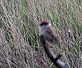 Bird out of focus.JPG