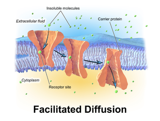 Passive transport - Depiction of facilitated diffusion.