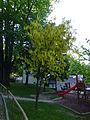 Bled (8898285790).jpg