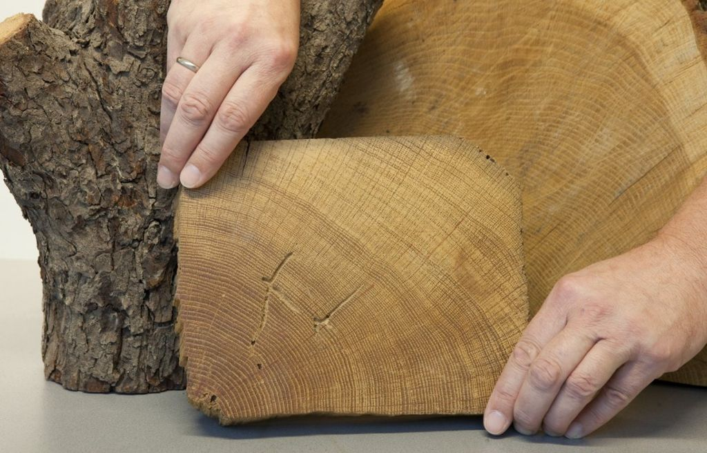 Blok hout waarop jaarringen zijn te zien - Unknown - 20534028 - RCE.jpg