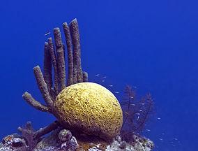 Blue Hole coral.jpg