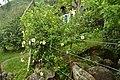 Blumen auf Weg nach Lagoinha do Leste II (22126352971).jpg