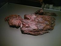 Bog-body Clonycavan-Man.jpg