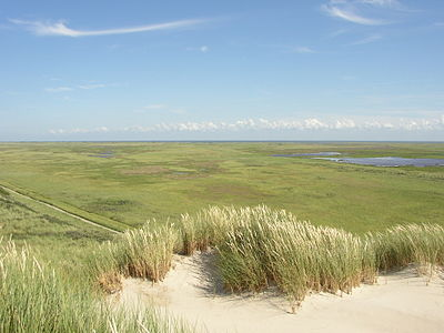 The Boschplaat nature area on the island of Terschelling, Wadden Islands, Friesland Bosplaat.JPG