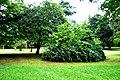 Botanic garden limbe40.jpg