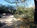 Boyce Thompson Arboretum, Superior, Arizona - panoramio (29).jpg