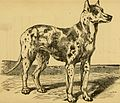 Breeding, training, management, diseases and c. of dogs- (1877) (14596349008).jpg