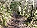 Bridleway descends toward Sawdde Fechan valley floor - geograph.org.uk - 1191397.jpg