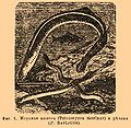 Brockhaus and Efron Encyclopedic Dictionary b32 835-1.jpg