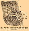 Brockhaus and Efron Encyclopedic Dictionary b80 695-0.jpg