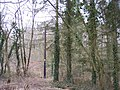 Broom Hill Wood - geograph.org.uk - 141251.jpg