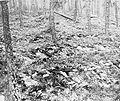 Buchenwald Ohrdruf Corpses 37319.jpg