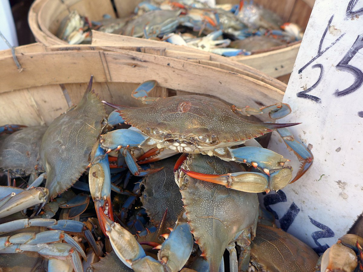 Crab Mentality Wikipedia