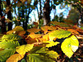 Bunte Blätter - Herbst.jpg