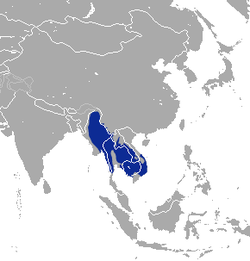 Burmese Hare area.png