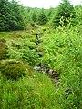 Burn in Strathyre Forest - geograph.org.uk - 869862.jpg