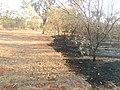 Bush Fire in Katherine, Northern Territory, Australia.jpg