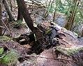 Bush whacking - Up the Cliff (8195202306).jpg