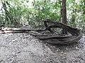 Butea parviflora-2-meenmudii falls-kerala-India.jpg