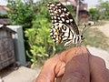 Butterfly20171025 124108.jpg