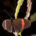 Butterfly (4177601758).jpg