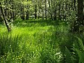 By Loch Chon - geograph.org.uk - 1356623.jpg