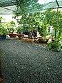 Cà phê sân vườn ở Bình Tân, tháng 6 năm 2018 (3).jpg