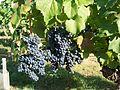 Cahors 2011 08 024.jpg