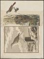 Calamodyta arundinacea - 1700-1880 - Print - Iconographia Zoologica - Special Collections University of Amsterdam - UBA01 IZ16200079.tif