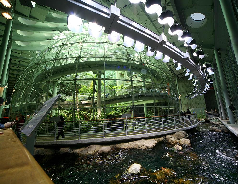 California Academy of Sciences aquarium and rainforest area