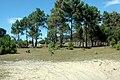 Camino hacia Laguna de Brioso Valizas Rocha Uruguay - panoramio.jpg