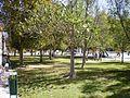 Campus UA 19.JPG